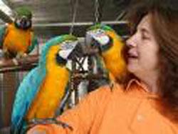 Papageien Partnervermittlung Ohnhäuser